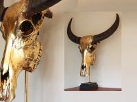 Buffel gold