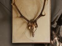 antlers-of-deer-on-wall-panel