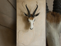 springbok-preperation-on-wall-panel