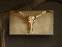 wall-panel-with-longhorn-skull-on-craquele-background