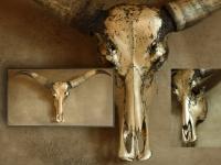 waterbuffel-schedel-op-wandpaneel-blond-goud
