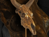 yak-skull-in-metalic-bronze-on-a-base-size-90hx-60w