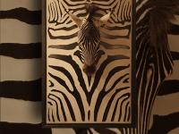wall-panel-zebra-head-on-zebraskin-pan050sp-09-size-91x139cm