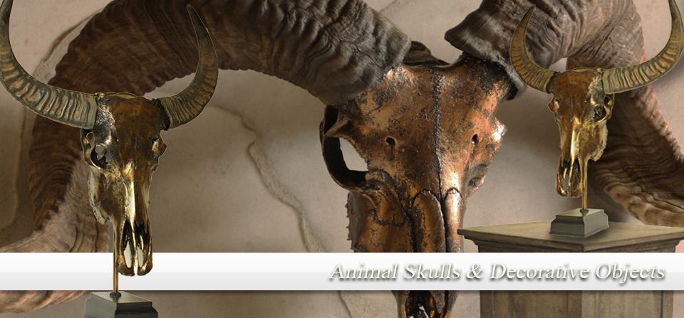 Animal skulls & antlers